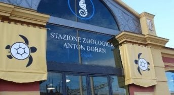 Anton Dohrn International Zoological Station PhD Fellowship Program in Italy, 2018-2019