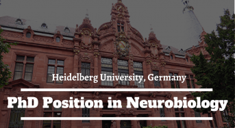 Heidelberg University PhD Position in Neurobiology in Germany, 2020
